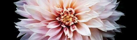 Substantial - Full Bloom (V2) [audio]