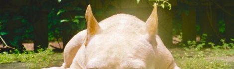 Asher Roth - Mommydog [single]