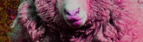 Wool See - Ewe Gross (Extended Version)