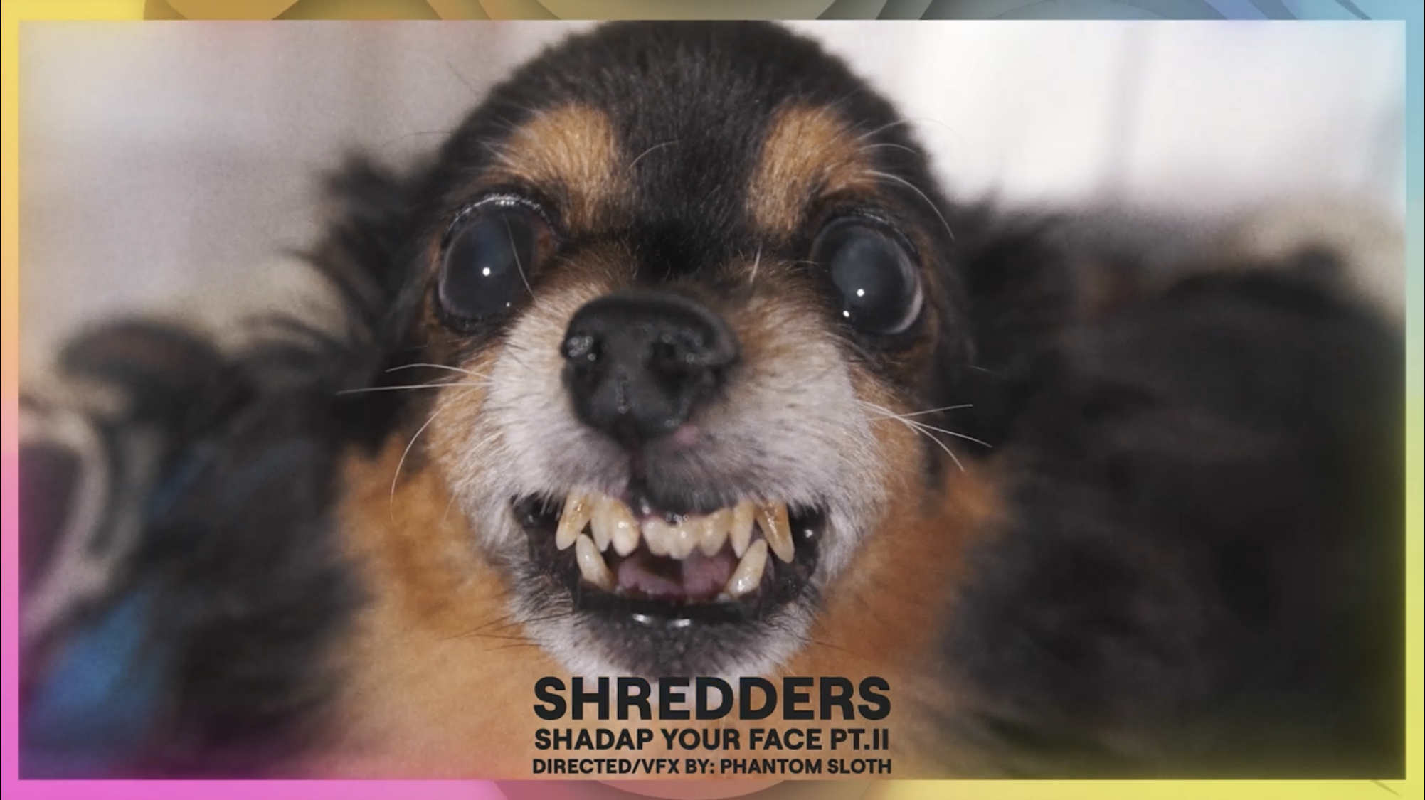 SHREDDERS - Shadap You Face Pt. II (official video)